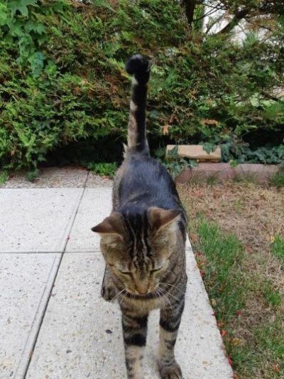 site gratuit pour la datation et le chat Boost branchement GRAR